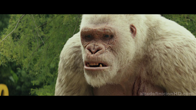 proyecto rampage 4